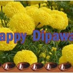 Tihar Dipawali Festival of lights