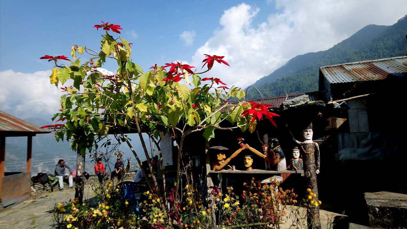 Christmas flower in Himalaya